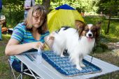 stock photo of epagneul  - Woman prepares a dog of breed papillon for an show - JPG