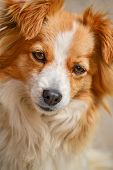 stock photo of cross-breeding  - Portrait of a cute cross - JPG