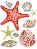 foto of pearl-oyster  - Set of seashells - JPG