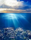 image of sky diving  - sea or ocean underwater life with sunset sky - JPG