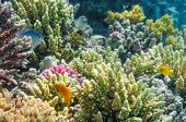 stock photo of sea-scape  - Underwater shot of coral reef in Red sea - JPG