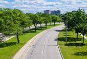 image of tree lined street  - Empty suburban tree - JPG