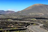 image of canary-islands  - vineyards on black volcanic sand at La Geria Valley Lanzarote Island Canary Islands Spain - JPG