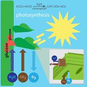 image of photosynthesis  - vector illustration of photosynthesis process - JPG