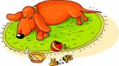 picture of dachshund  - Dachshund has played and sleeps - JPG