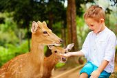 picture of child feeding  - cute boy feeding young deers from hands - JPG