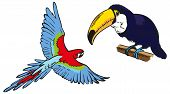 image of toucan  - color illustration of toucan and blue macaw flying on a white background - JPG