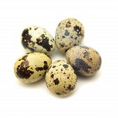 image of quail egg  - spotted quail eggs isolated on white background - JPG