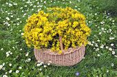 picture of bastet  - full wicker basket beautiful healthy medical flowers of st - JPG