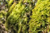 stock photo of bavaria  - Closeup green moss on mountain Breitenstein in the Alps in Bavaria Germany - JPG