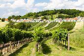 stock photo of wine cellar  - wine cellars with vineyards - JPG