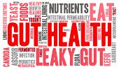 stock photo of enzyme  - Gut health word cloud on a white background - JPG