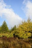 picture of wilder  - View of colorful trees along mountain meadow in early fall  - JPG