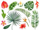 image of heliconia  - Large hand drawn watercolor tropical plants set - JPG
