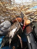 pic of duck-hunting  - Wild Ducks and gun in the boat - JPG
