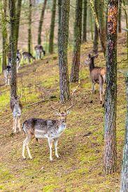 foto of deer  - Herd of deer in the wild - JPG