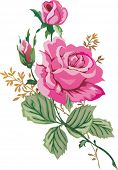 illustration with pink rose flower