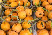 Ripe Organic Vivid Orange  Medlars In Boxes At Farmers Market In Spain. Bright Vibrant Vivid Colors. poster