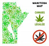 Royalty Free Marijuana Manitoba Province Map Collage Of Weed Leaves. Template For Narcotic Addiction poster