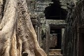 Ancient Stone Ruin Of Banteay Kdei Temple, Angkor Wat. Ancient Temple Debris And Old Tree. Angkor Wa poster