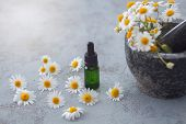aromatherapy oil with fresh camomile flowers - beauty treatment poster