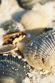 foto of sabbatical  - Seashells on the seashore in the sand - JPG
