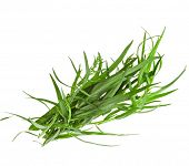 fresh tarragon herb isolated