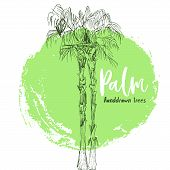 Isolated Coconut Or Queen Palm Trees With Leaves. Beach And Rainforest, Desert Coco Flora Logo. Foli poster