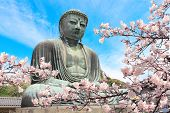 The Great Buddha and flowers of sakura, Kotoku-in temple, Japan, Asia. Cherry blossoming season in J poster