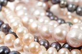 pic of pearl-oyster  - Precious pearls beads close up micro shot - JPG