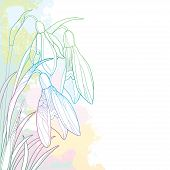 Vector Corner Bouquet Of Ornate Outline Snowdrop Or Galanthus Flowers And Leaf In Pastel Pink, Blue  poster