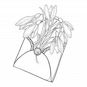 Vector Bouquet Of Ornate Outline Spring Snowdrop Or Galanthus Flowers And Leaf In Open Craft Envelop poster