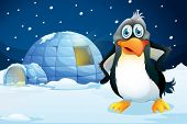 picture of igloo  - Illustration of a penguin standing near the igloo - JPG