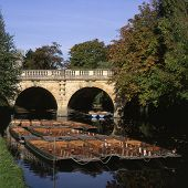 picture of magdalene  - Moored punts on River Cherwell by Magdalen Bridge - JPG