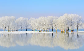stock photo of winter trees  - Frosty winter trees near Danube river - JPG