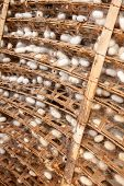 stock photo of cocoon  - Frame with silkworm cocoons at a silk factory - JPG