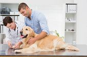 pic of medical office  - Vet using nail clipper on a dog with its owner in medical office - JPG