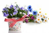 pic of flower pot  - blue campanula flowers in flower pot and other flowers - JPG