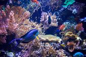 foto of genova  - View of one of the tropical pools of the Genova Aquarium - JPG