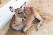 stock photo of bambi  - Roe deer - JPG