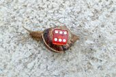 image of snail-shell  - Chance in coming slow - JPG