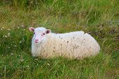 picture of iceland farm  - July in Iceland - JPG