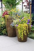 pic of lobelia  - Two large containers of perennial garden flowers - JPG