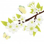 stock photo of apple blossom  - Vector illustration of apple - JPG