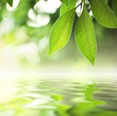 Green leaves reflecting in river water, closeup. Copyspace.