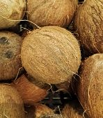 Heap Of Coconut (cocos Nucifera), With Rough Texture And Brown Color, In A Supermarket Of Tropical F poster