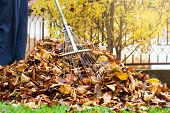 Man Collecting Fallen Autumn Leaves In The Yard First Person View poster