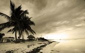 foto of beach hut  - Palm trees by the beach in sepia color tone with cloudy sky background - JPG
