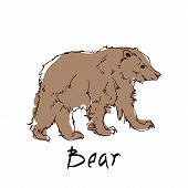 Brown Bear Side View Close-up On White Background. Wild Animal Stands On Four Paws. Vector Illustrat poster