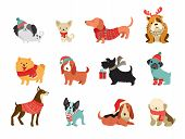 Collection Of Christmas Dogs, Merry Christmas Illustrations Of Cute Pets With Accessories Like A Kni poster